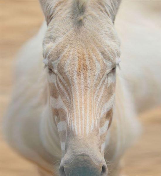 albino-animals-3-24__880_R