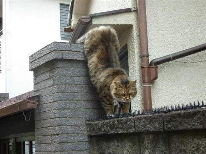 social-cat-11_R