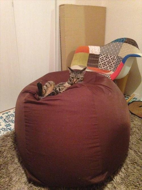 cat1_R