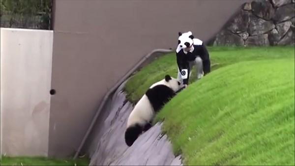 panda8_R