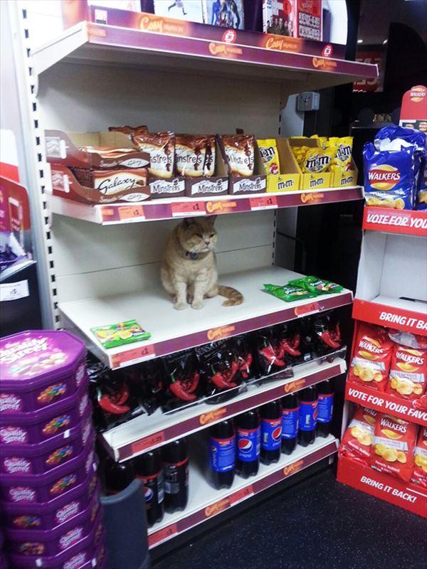 supermarket-sainsburys-cat-olly-oliver-brockley-london-71_R