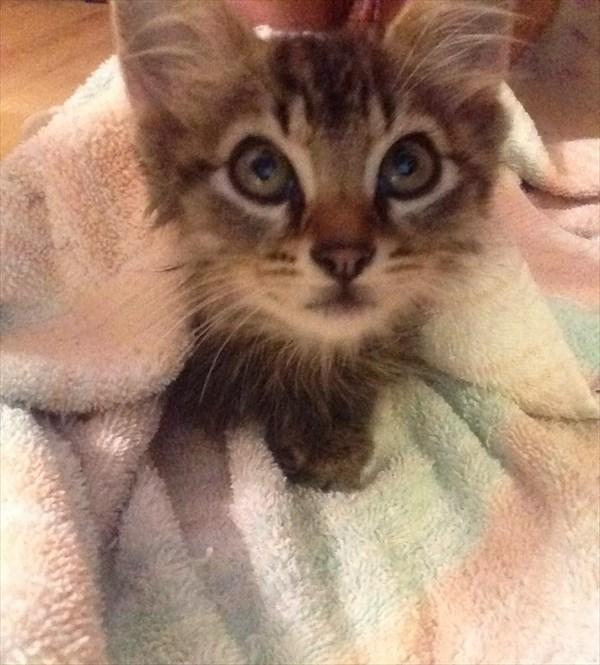 kitty (3)_R