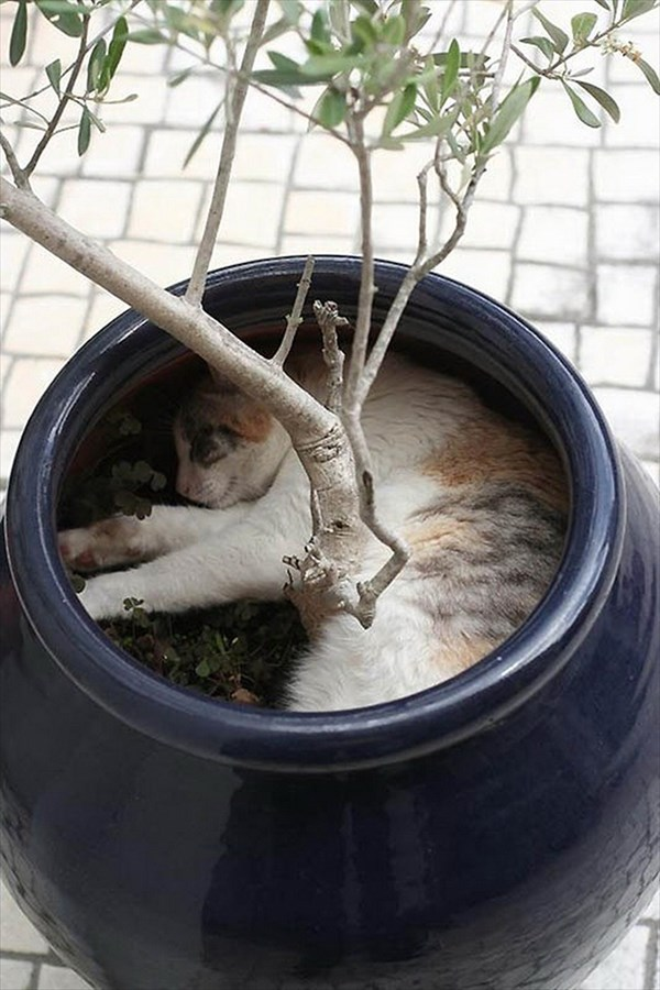 i-am-tree_r