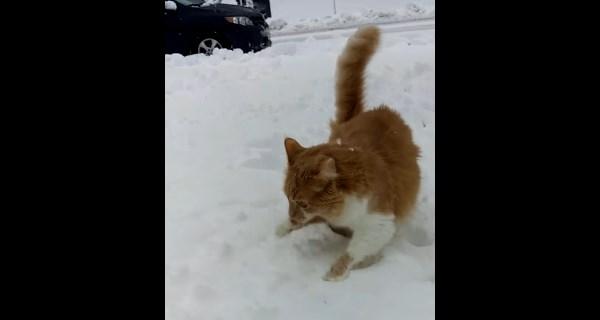 catdog1_r