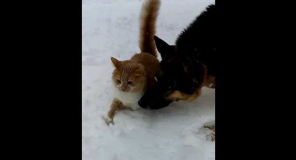 catdog2_r