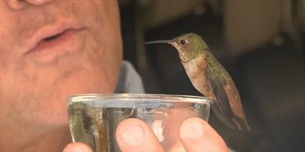 rescue-hummingbird-dog-friendship-rex-hummer-3_r