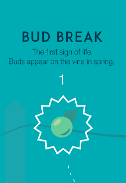 1-budbreak