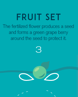3-fruitset
