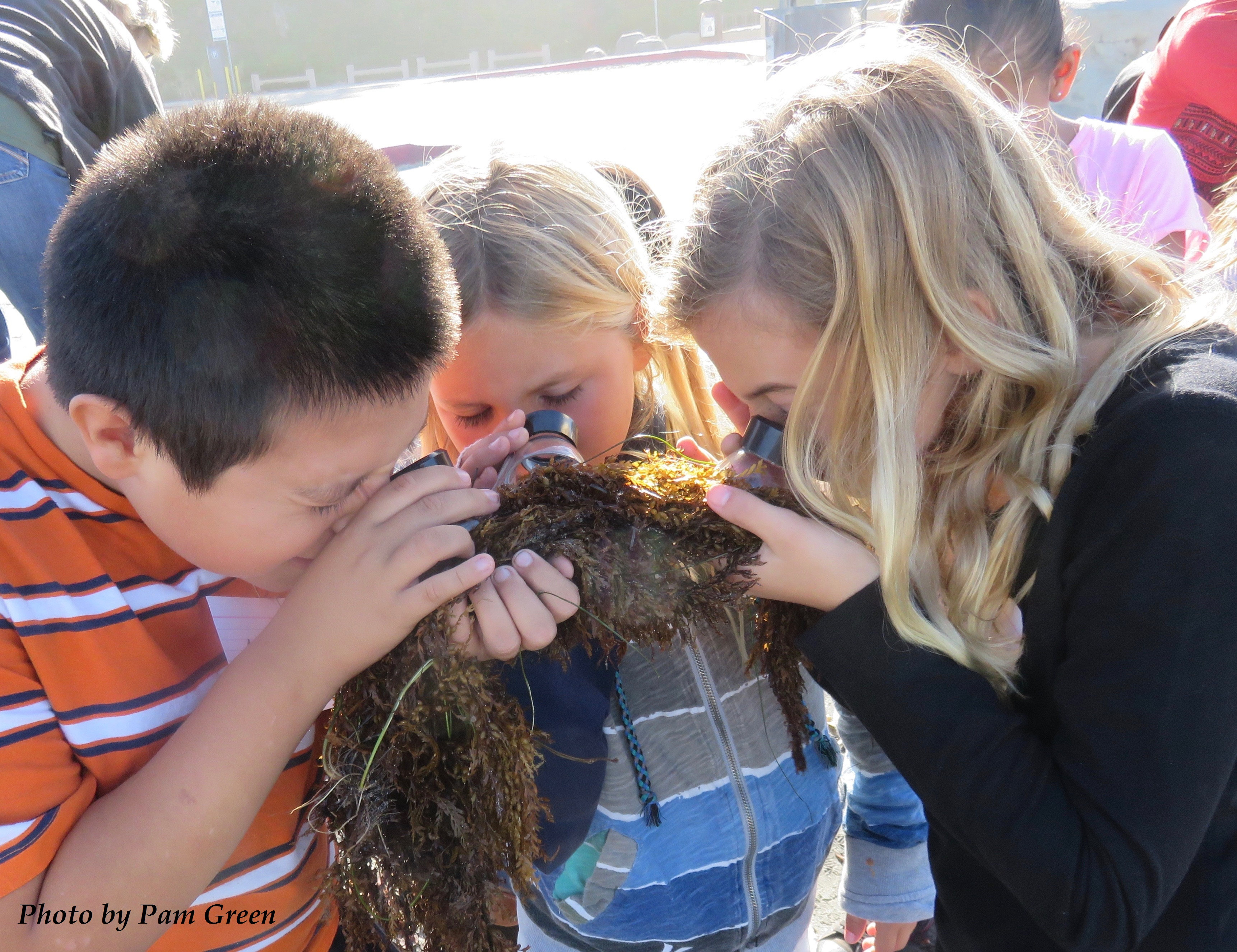 sharing our shores Dec 2015 kids and kelp