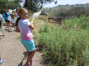 Summer Camp 2016 insect walk