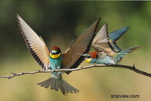 birds of france snipview