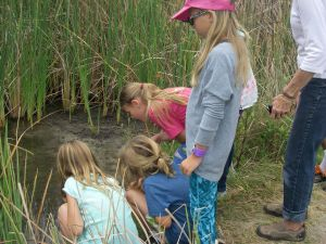 summer camp 2016 looking at creatures in mud flats