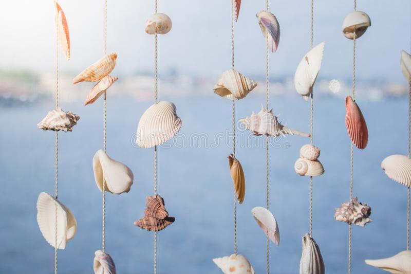 seashells from FB