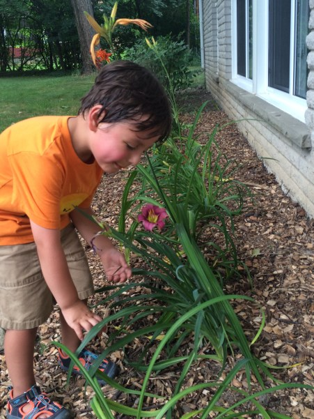 Lucas loves the lillies and they like their new home.
