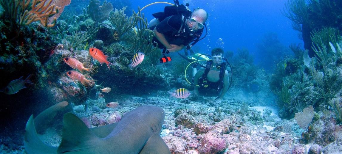 SHARK POINT (SCRUB ISLAND) | BVI DIVE MAP