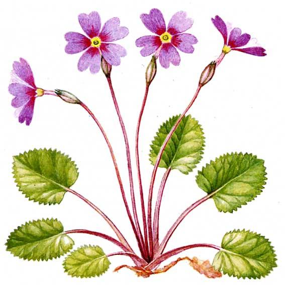 роскошное течение: растения из красной книги.