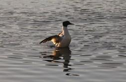 P. Calvé Lac Heney - 07