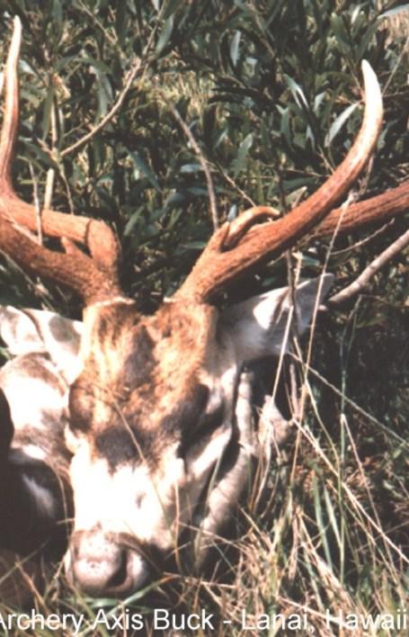 deaxis-lanai-003-2nd-archery.jpg