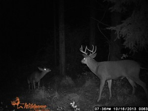 He still lives and looks to have made it through the rifle season in Oregon.  No one is suppose to hunt this place with a rifle!