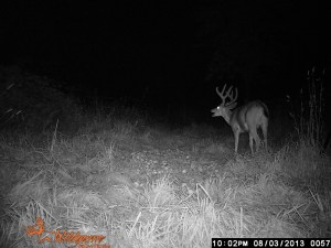 Mark's Blacktail in the velvet!