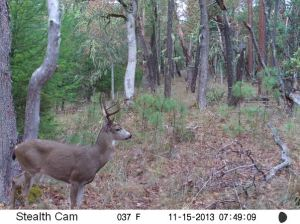 On of the bucks in the area!