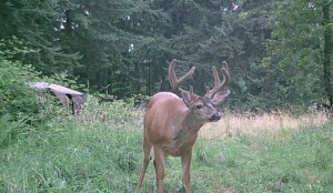 This was taken in August just before opening archery season!