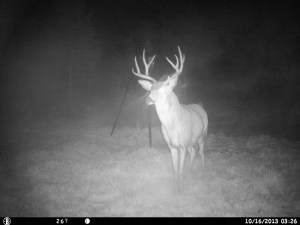 This has been Mark D's target buck for 2013!  He decided not to show!