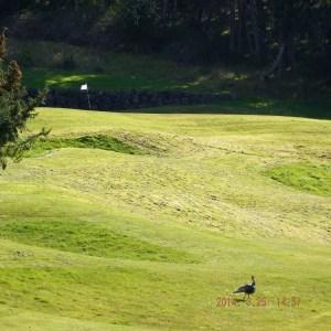 Turkeys Golf Course flag INT