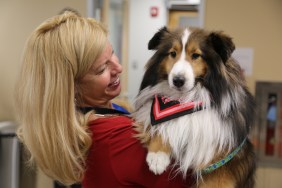 Employee looking at Shetland sheepdog while she cradles him in her arms
