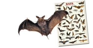 bats_slider