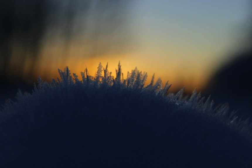 Stoklosa used a February snowstorm as an opportunity to capture nature's beauty.
