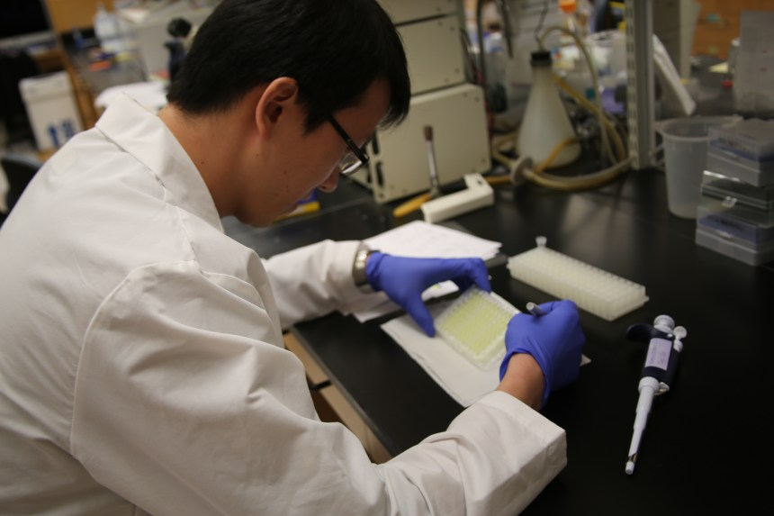 Teng Zuo of the Wesemann lab in the Division of Rheumatology, Immunology and Allergy.