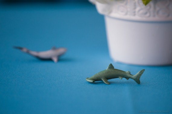 Fondly known as the Shark Tank, the May 15 event was the seventh in what has become an annual tradition at the Brigham.
