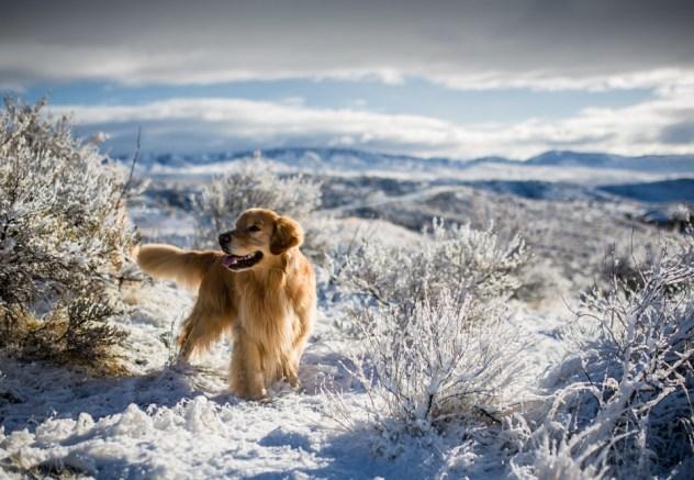 groovy_snow_morning