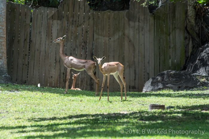 2014 Egg Safari at Zoo Miami - April 20, 2014 00022