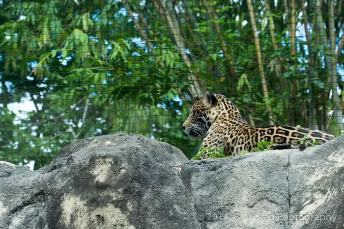2014 Egg Safari at Zoo Miami - April 20, 2014 00034