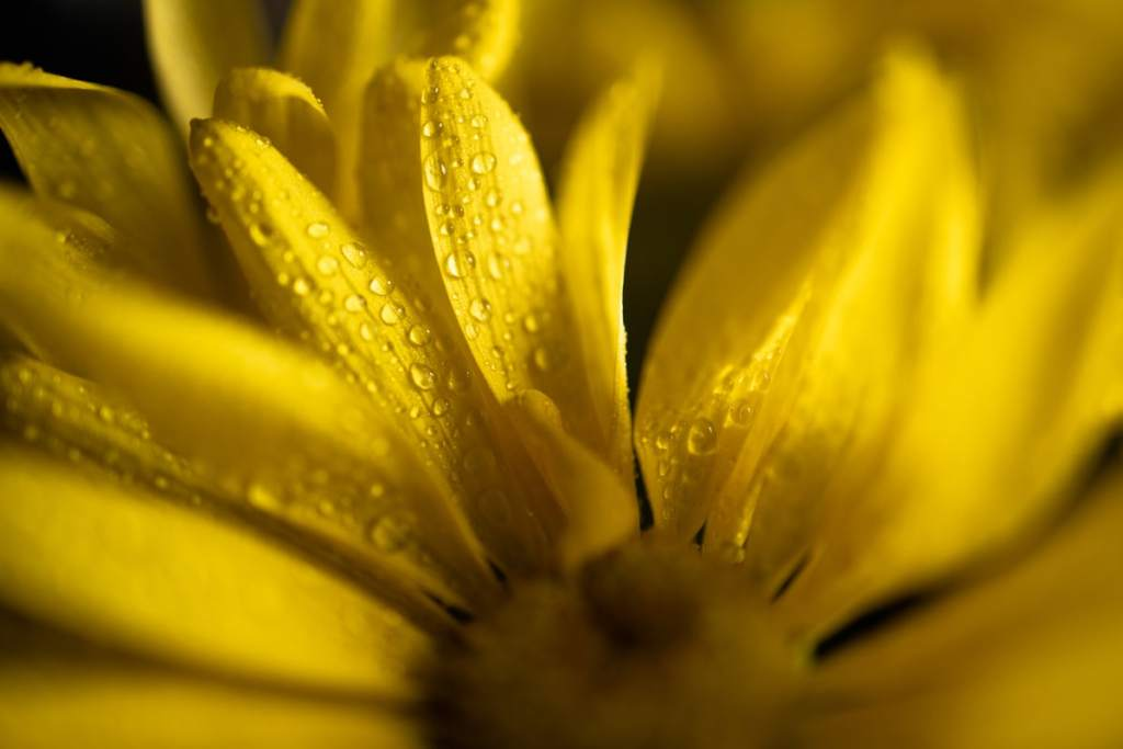 water droplets for creative macro photography ideas
