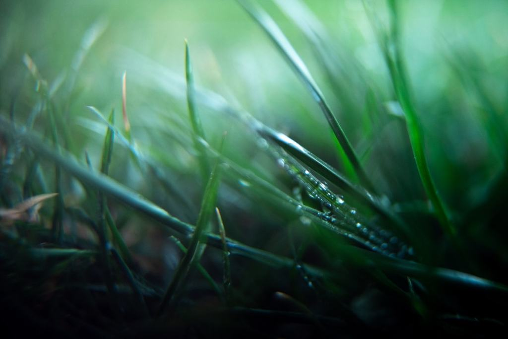 macro photography of grass is a creative photo idea