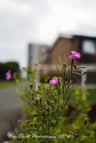 Propagated plants