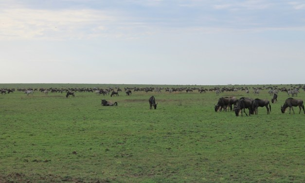 Ngorongoro Crater and Manyara Safari, 4 Days