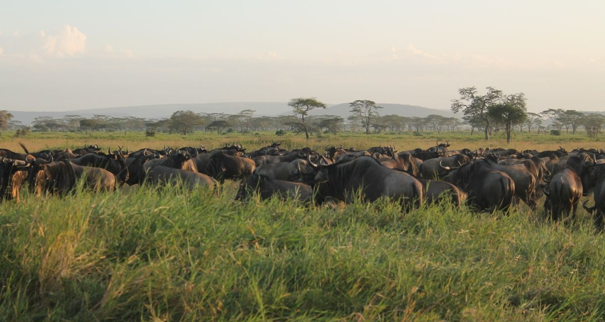 Serengeti Wildebeest Migration Safari, 5 Days