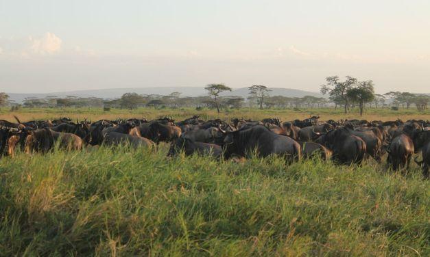 Serengeti Wildebeest Migration Safari, 5 Days