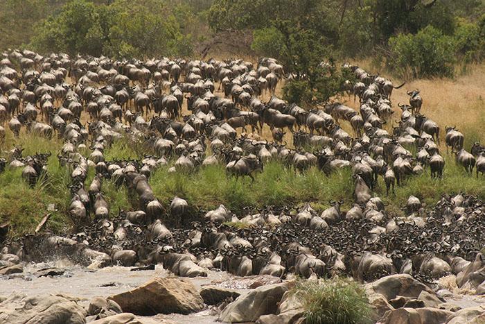 4 Days Wildebeest Migration Safari