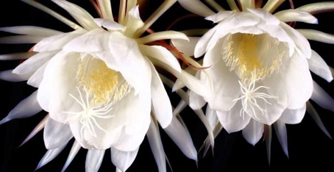 top 5 loai hoa dat do nhat hanh tinh thumb