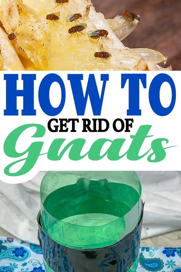 They then sink into the mixture and get caught. An affordable and accessible method, but it offers excellent results on how to get rid of gnats quickly! #howto #gnats #fruitflies #diy