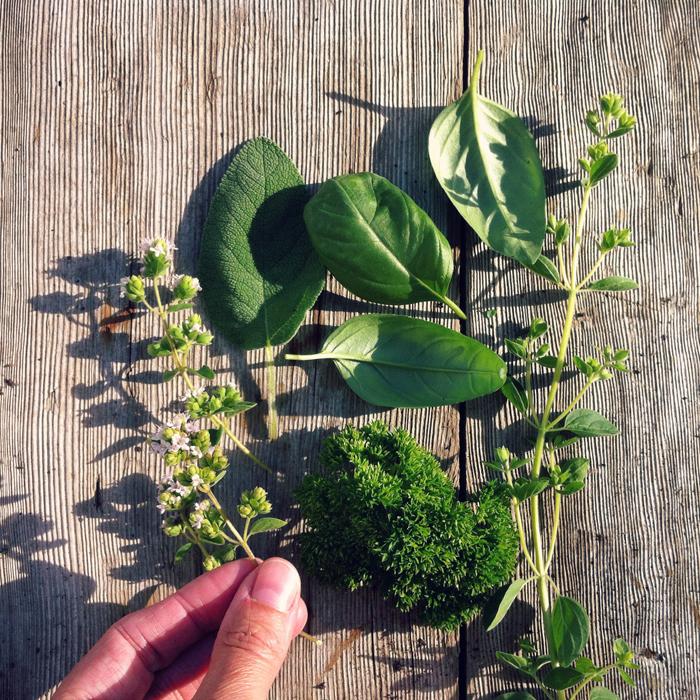 Krydderurter-fra-egen-have