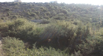 Land for Sale Bejjeh Jbeil Area 1085Sqm