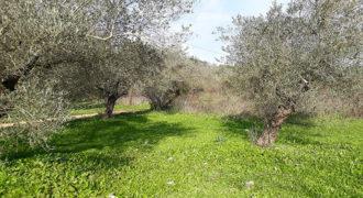 Land for Sale Ain Kfaa Jbeil Area 3175Sqm
