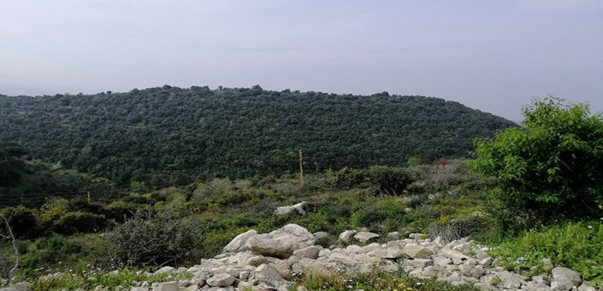 Land for Sale Gharzouz Jbeil Area 3550Sqm