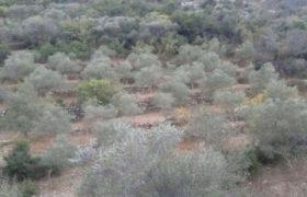 Land for Sale Kfar Hay Batroun Area 2000Sqm